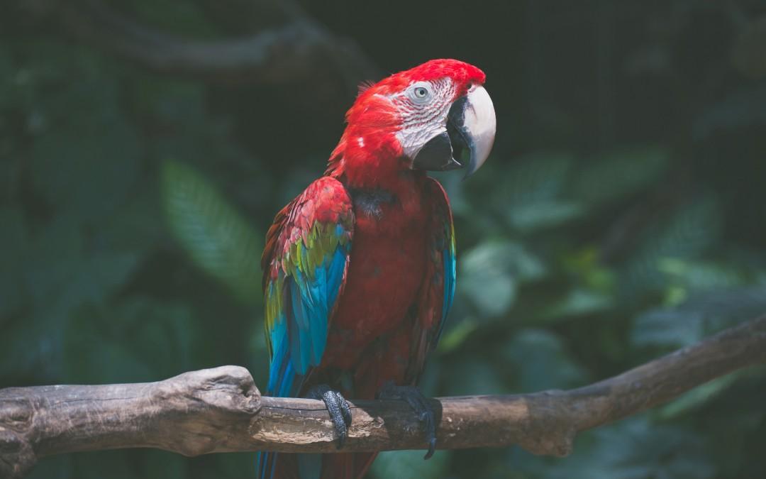 Η ιστορία του παπαγάλου